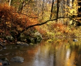 bobbin-mill-brook-in-autumn_DSC09944