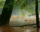 fog-on-autumn-brook_DSC06849
