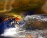 leaf-on-rock-in-autumn-stream_DSC06363