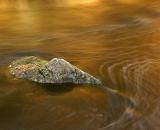 rock-in-Stetson-Brook_DSC06389