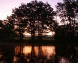 silhouetted-trees-at-dawn-on-Bog-brook_DSC00135