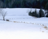 fence-and-trees-in-winter-field_DSC03416