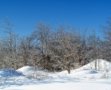 ice-encrusted-trees-and-snow-mounds_DSC05691