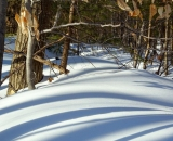 shadows-on-snow-in-woods_DSC02839