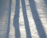 Late afternoon tree shadows on the snow