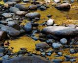 autumn-color-and-rocks-in-woodland-stream_DSC00816