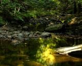autumn-color-on-woodland-stream_DSC00217