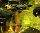 autumn-color-on-woodland-stream_DSC00272