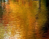 autumn-color-on-woodland-stream_DSC00380