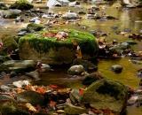 autumn-color-on-woodland-stream_DSC02091