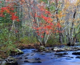autumn-color-on-woodland-stream_DSC02645