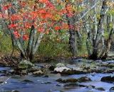 autumn-color-on-woodland-stream_DSC02651