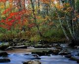 autumn-color-on-woodland-stream_DSC02663