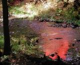 autumn-color-on-woodland-stream_Dscn2698