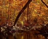 autumn-color-on-woodland-stream_P1090662