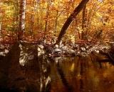 autumn-color-on-woodland-stream_P1090663