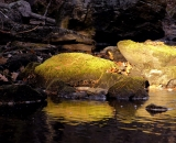 Morning light on mossy rocks along stream