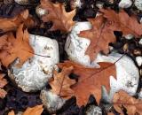 Dead oak leaves on rocks