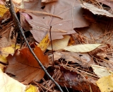 Dead leaves on forest floor