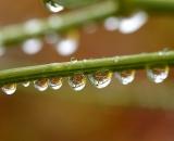 Water droplets on flower stem