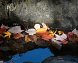 Autumn leaves on a stream - 01