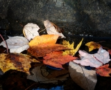 Autumn leaves on stream - o2