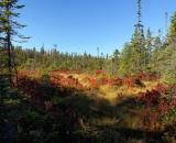 autumn-bog-at-Acadia-National- Park_DSC09695