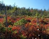 autumn-bog-at-Acadia-National-Park_DSC09701