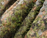 granite-boulders-on-Cadillac-Mountain_DSC08545