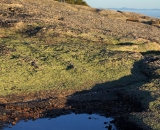 puddle-on-top-of-cadillac-mountain_DSC09927