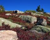 rocks-and-vegetation-on-Cadillac-Mountain_DSC00025