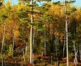 Baxter-State-Park-edge-of-pond-in-autumn_DSC00641