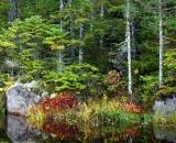 Baxter-State-Park-edge-of-woodland-pond_DSC00089