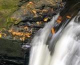 Bushkill Falls - 13
