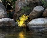 Merced-River_DSC07388