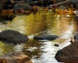 autumn colors in Bridal Veil Stream_DSC07914