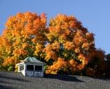 Barn cupola with colorful fall foliage