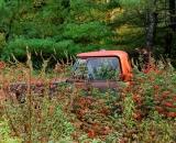 brambles-overgrowing-old-truck_RAG 041