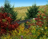 fall-colors-along-wooden-fence_DSC00076