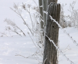 Frosty fence posts and barbed wire