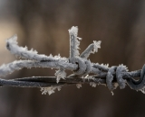 Hoar frost on barbed wire-1