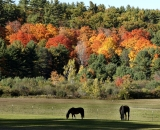 Horses in pasture with fall foliage