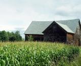old-rustic-barn-and-cornfield_DSC08945