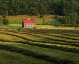 red-barn-and-rows-of-raked-hay_P1080906