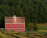 red-barn-and-rows-of-raked-hay_P1080909