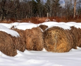 round-hay-bales-covered-with-snow_P1020245