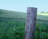 single-fence-post-and-field_RAG 108