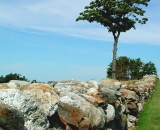 stone-wall-on-hill-with-single-tree_RAG 015
