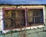 vines-on-window-of-old-shack_DSC03419
