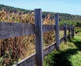 wooden-fence-at-edge-of-corn-field_Dscn2198